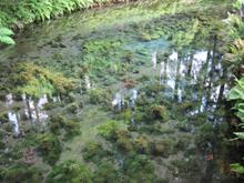 熊本 南阿蘇村 白川水源めぐり